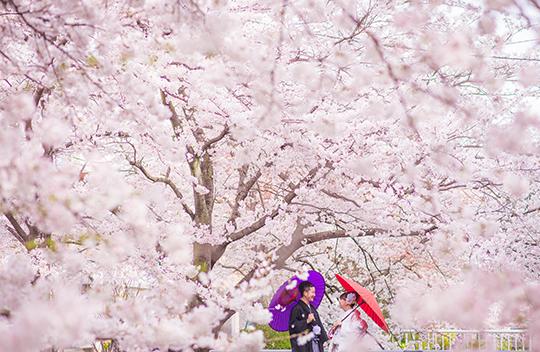 201602_wasou_0047